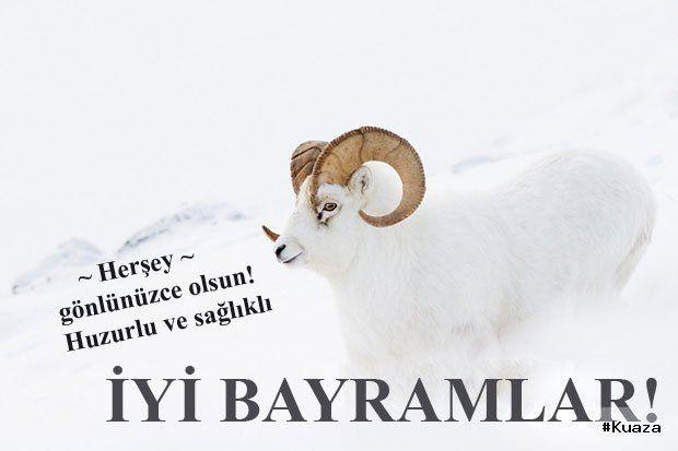 En Guzel Kurban Bayrami Mesajlari Resimli Movie Posters Poster Islam