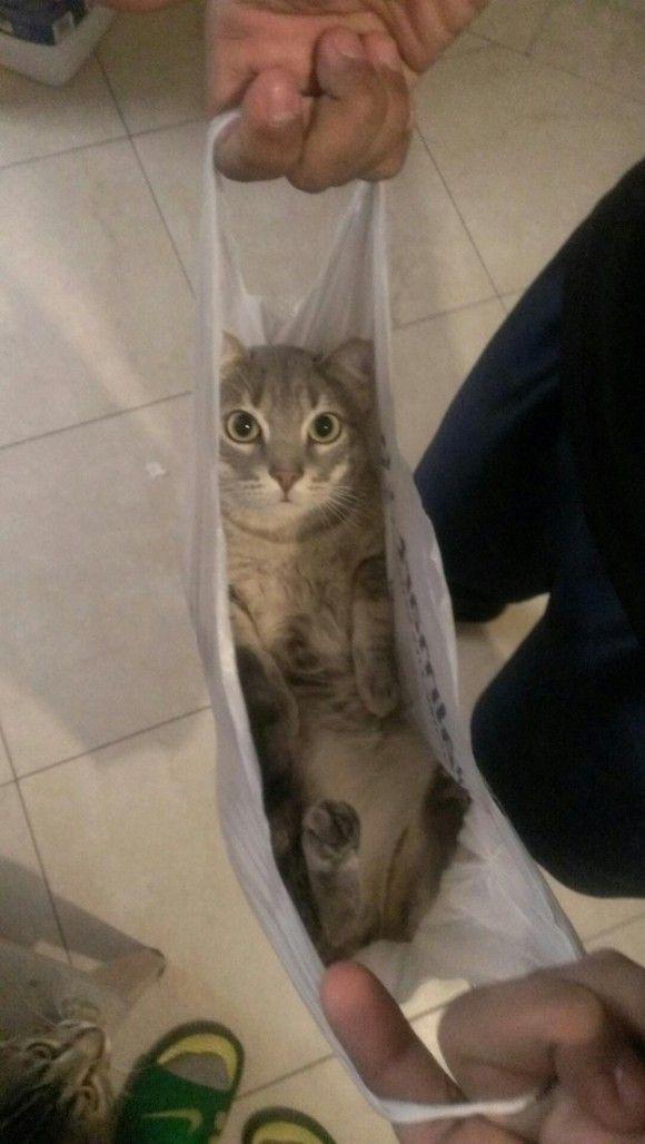 入りにくいほど魅力的 袋にすっぽり入り込み出ようとしない猫袋16選 猫の愛 かわいいペット おかしな動物