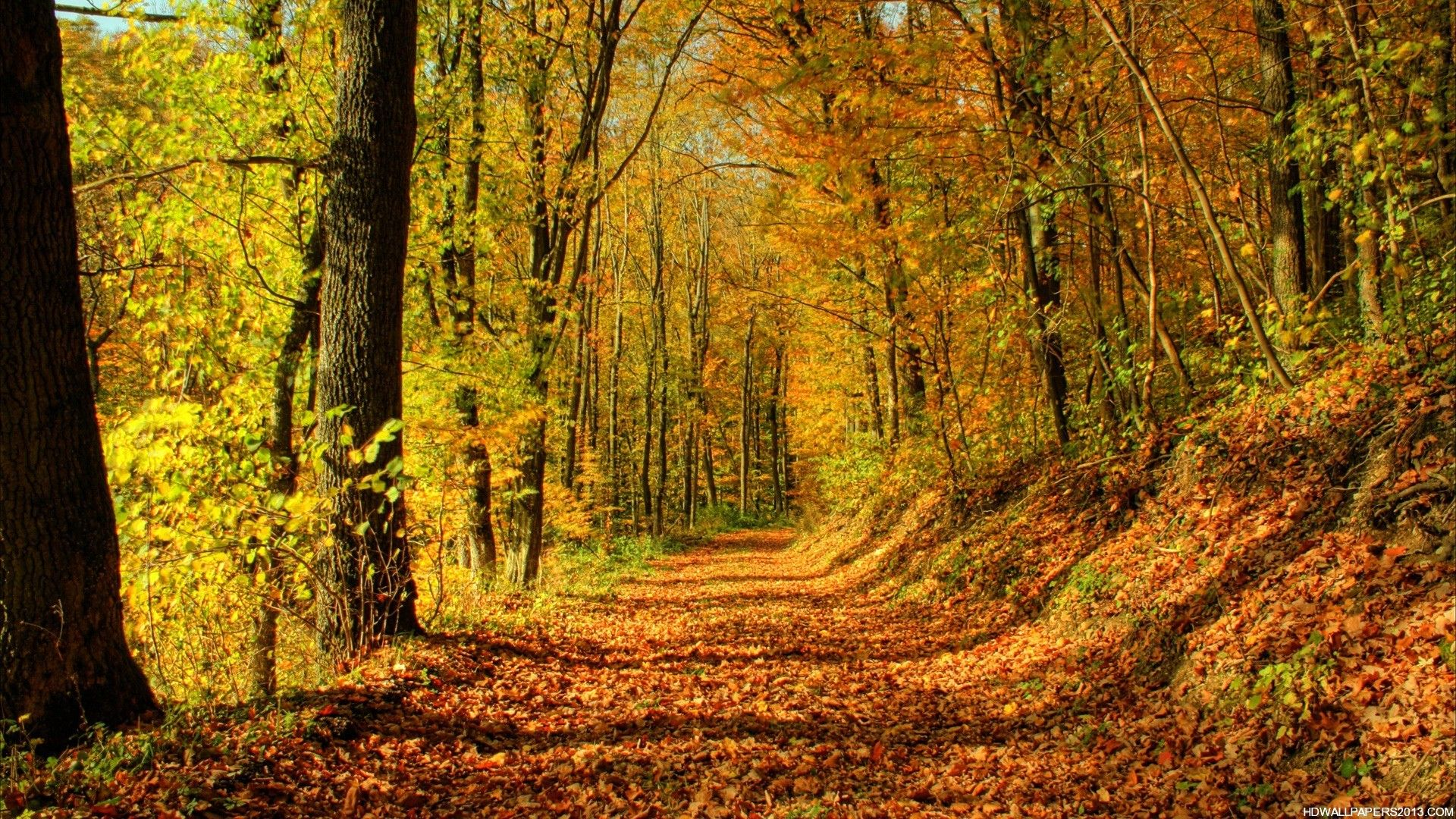 autumn live wallpaper free for android download