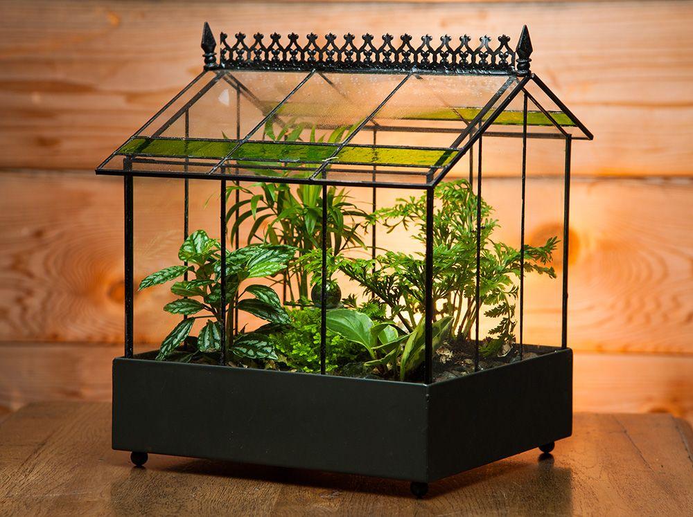 Mini conservatory terrarium Indoor garden, Indoor herb
