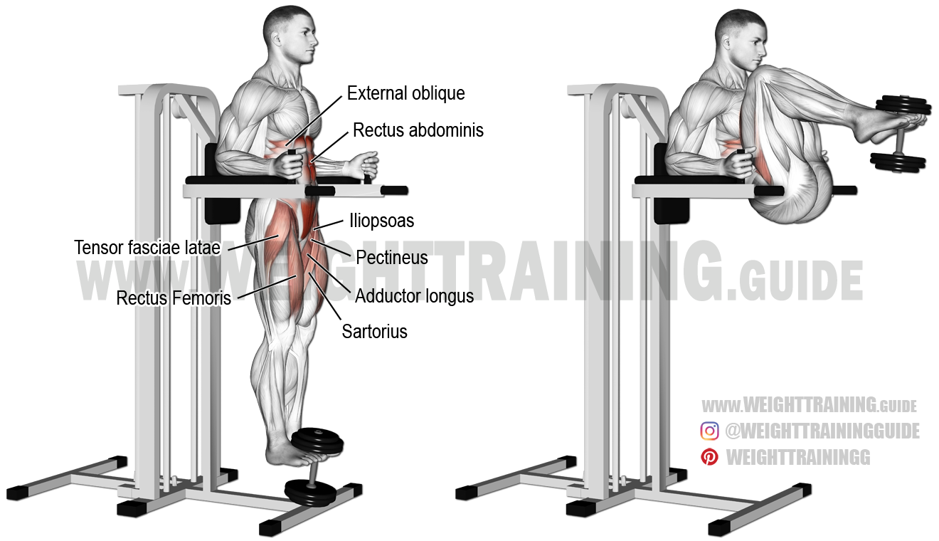 Weighted Captain S Chair Leg And Hip Raise Exercise Instructions And Video Leg Raise Exercise Lower Body Workout Workout Guide