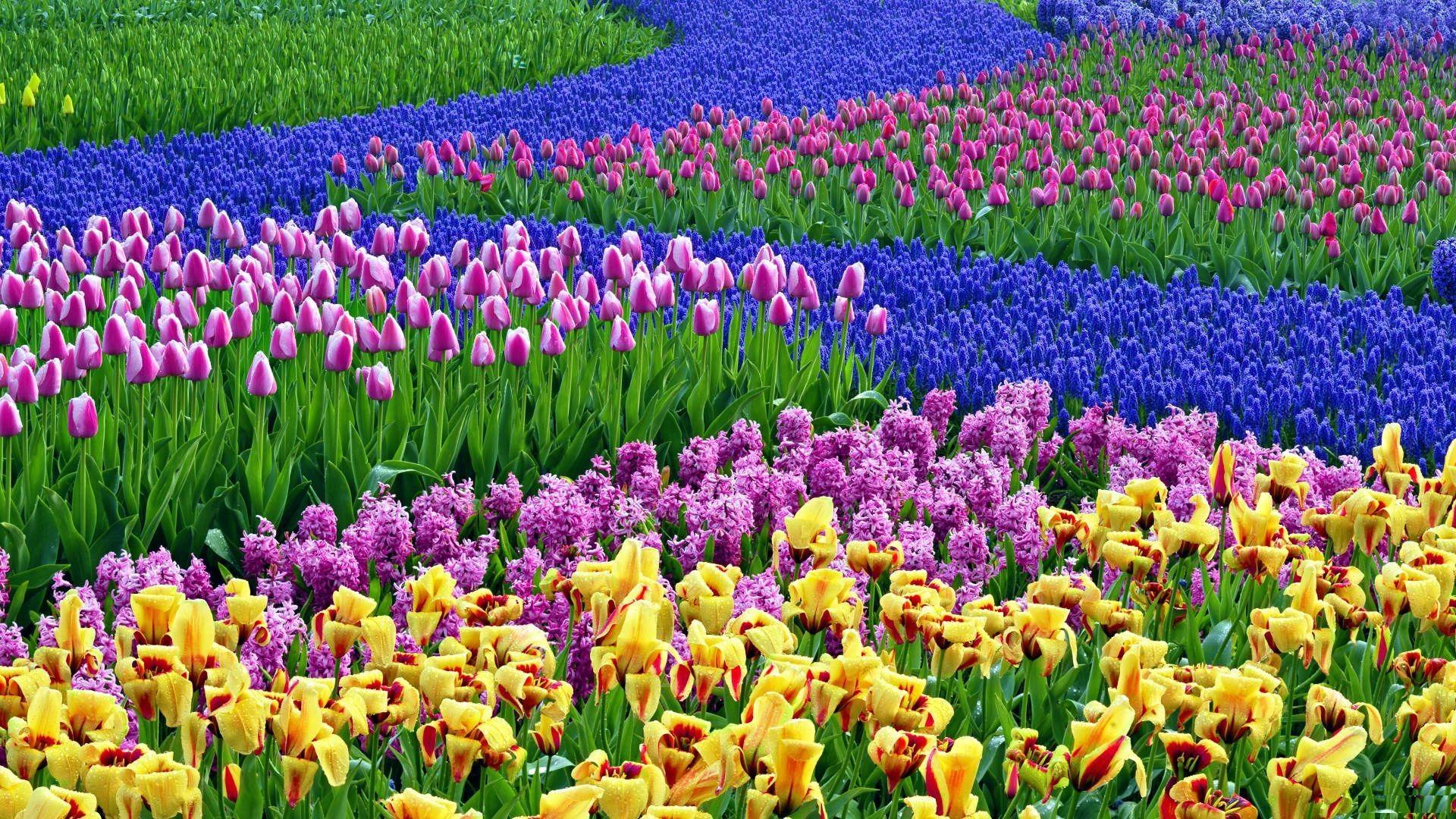 Field of Flowers wallpapers  wallpapers  Pinterest  Fields