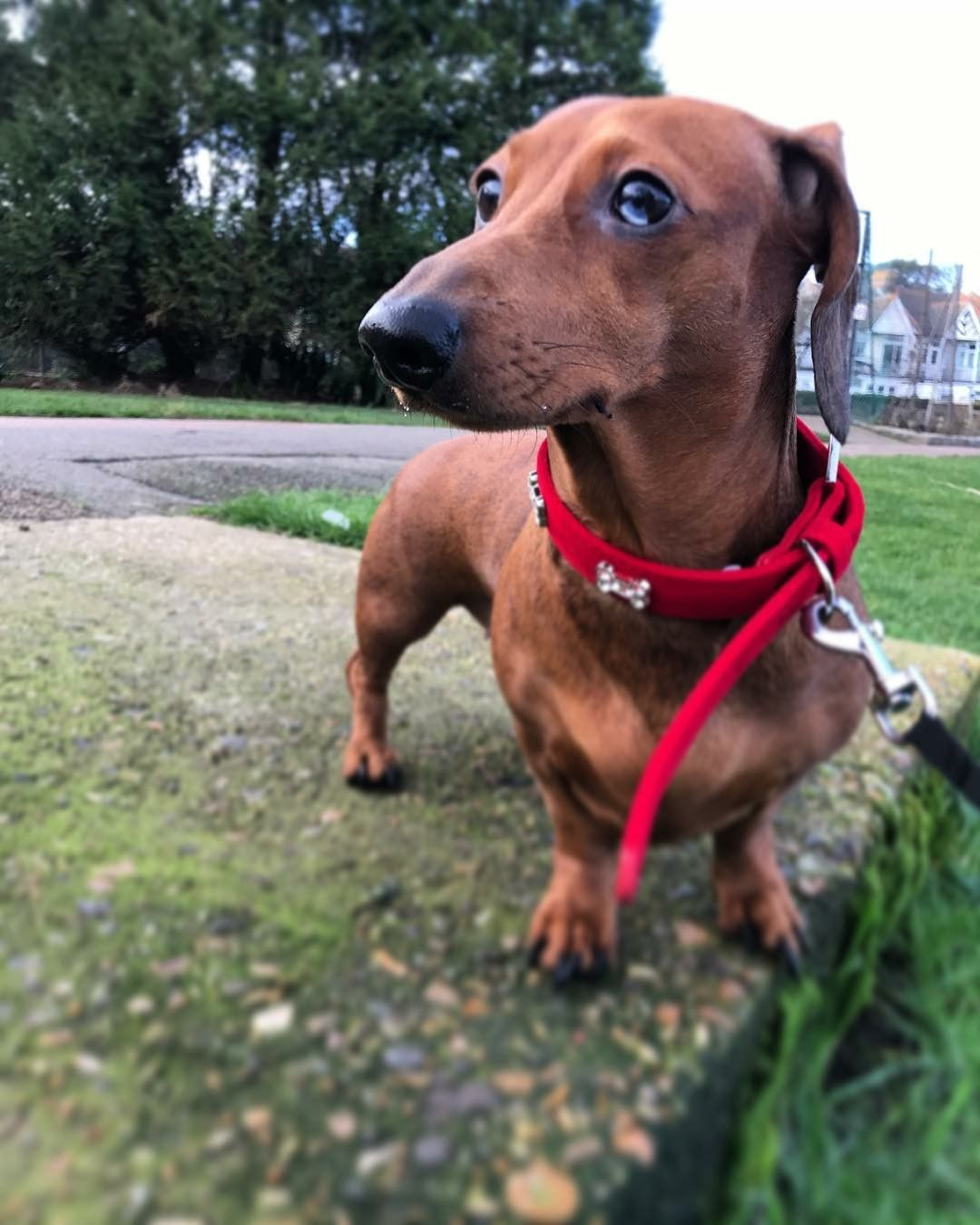 Pin by rebeca lobos on fotografía pinterest dachshunds weiner