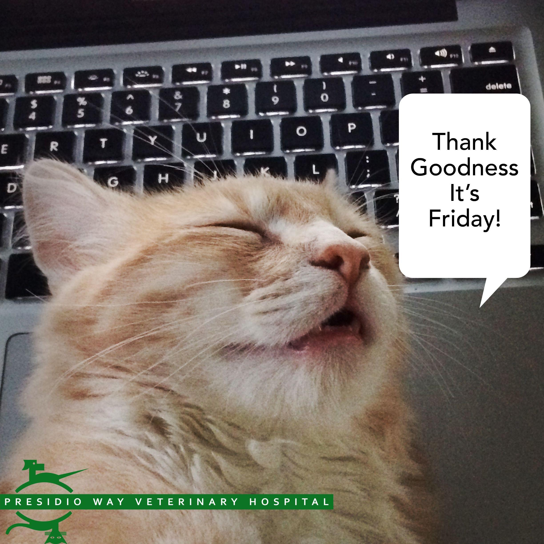 Has A Long Work Week Left You Comatose Presidioway Sanfrancisco Thankgoodnessitsfriday Cats Veterinary Hospital Animal Antics Veterinary