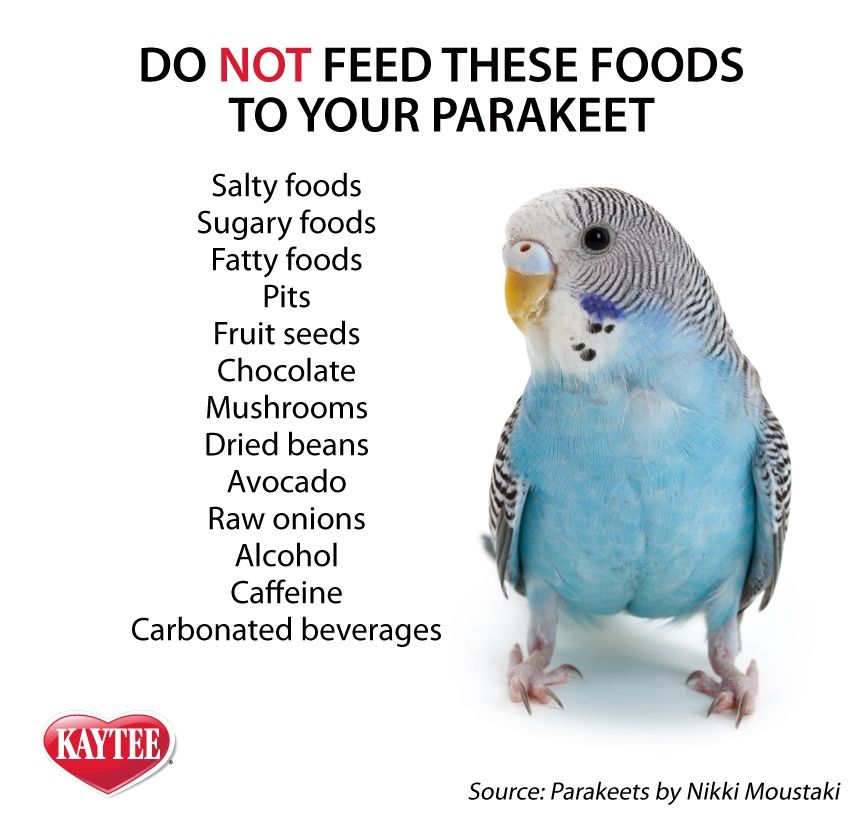 Do You Not Feed These Foods To Your Parakeets Show Them Love With Healthy Treats From Kaytee Instead Before Feeding Any Parakeet Parakeet Food Parakeet Care