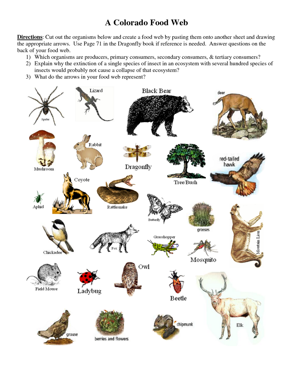 Wetland Food Web Worksheet Answers Wetland Food Web