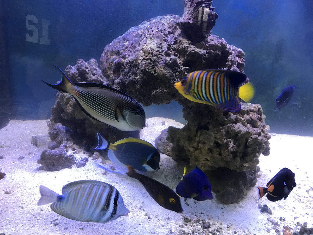 The Best Veggie Flakes For Tangs And Other Herbivores Photo 4fordfamily Https Www Reef2reef Com Threads Best Veggy Fl Herbivores Marine Fish Animal Protein