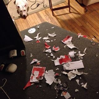 The delectable DVDs you were about to return. | 12 Things Your Dog Eats When You Leave For Work