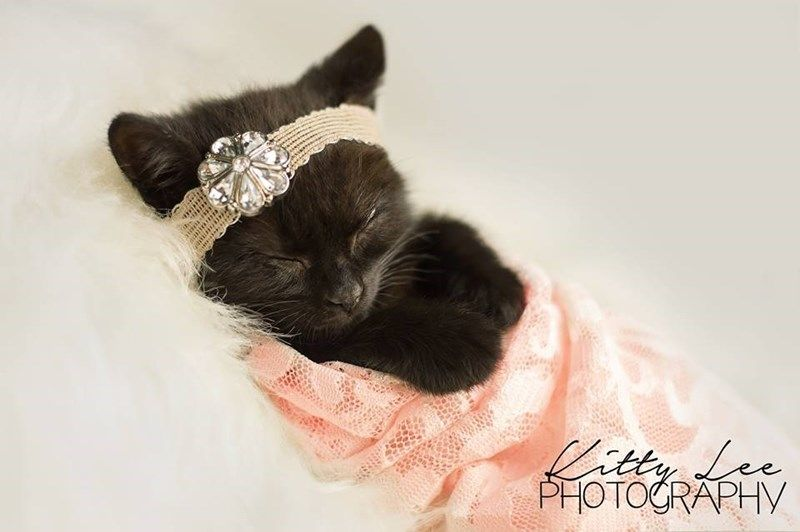 An Amazing Newborn Kitten Photo Shoot I Can Has Cheezburger