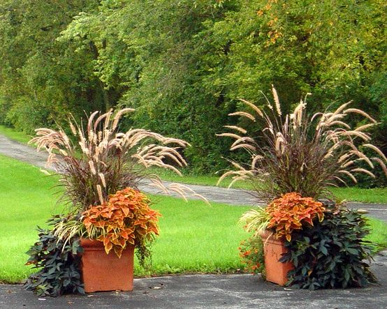 Fall planter ornamental grass garden pinterest for Large grasses for gardens