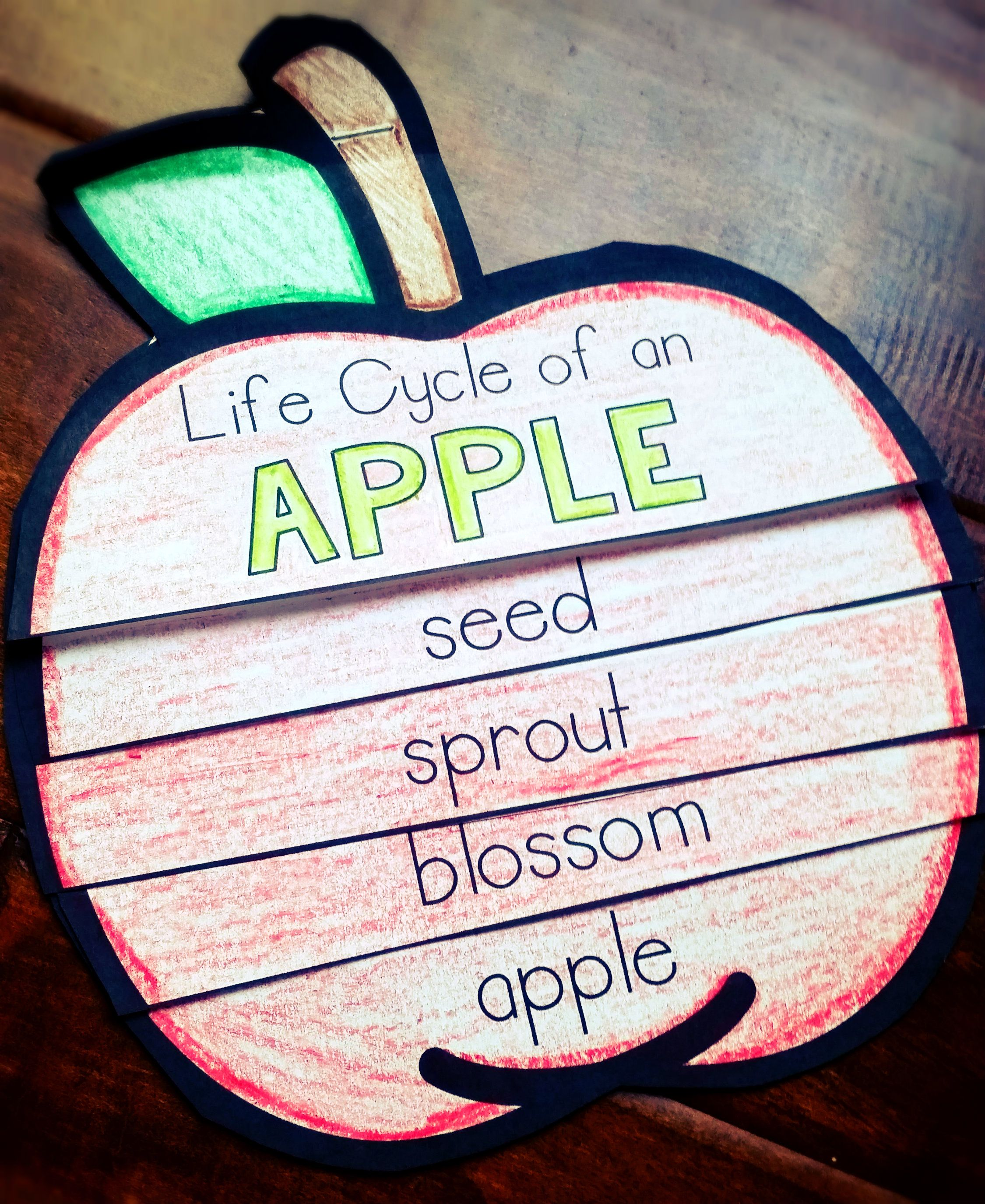 The Kids Will Love This Flip Book To Learn About The Life Cycle Of