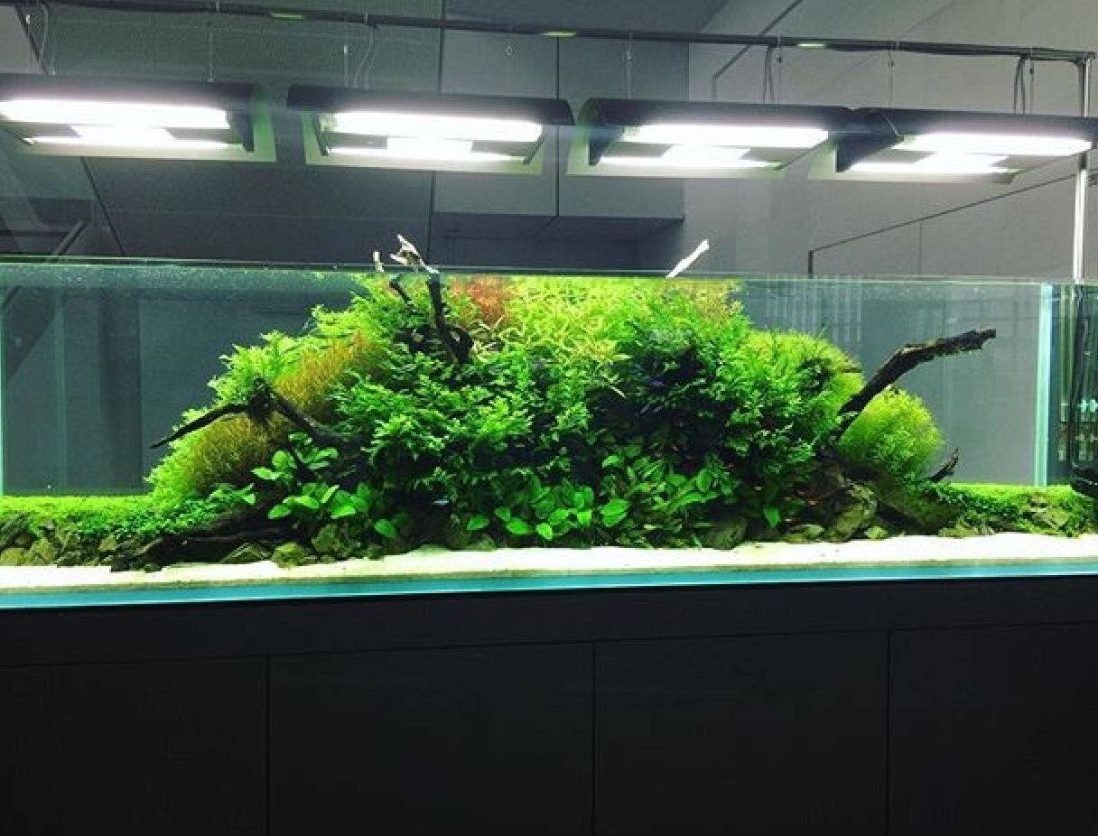 Pin by paul welsh on aquariumvivarium pinterest vivarium and
