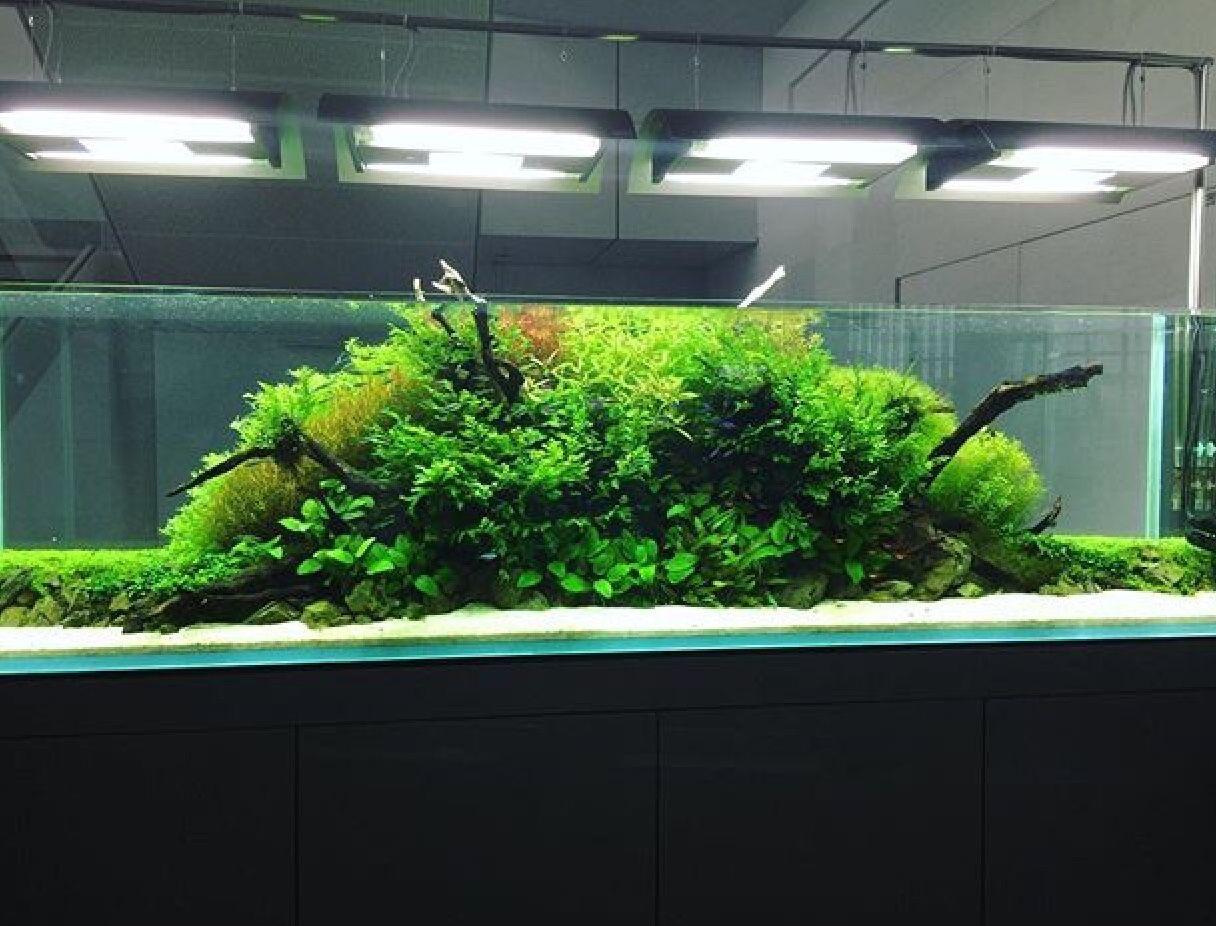 Pin by paul welsh on aquariumvivarium pinterest vivarium and