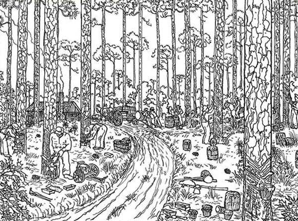 Rainforest Coloring Pages For Adults : Trees logging rainforest coloring page social studies