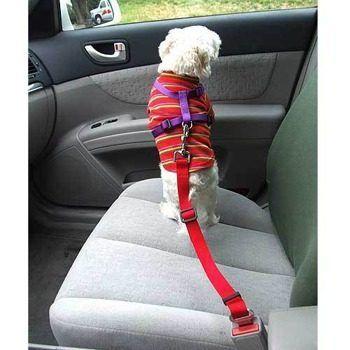 Cinturon para perros