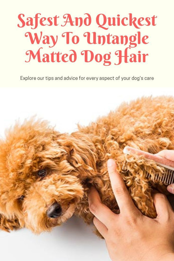 Safest And Quickest Way To Untangle Matted Dog Hair Dogcaretips Dogcare Doghair Matted Dog Hair Dog Skin Care Dog Hair