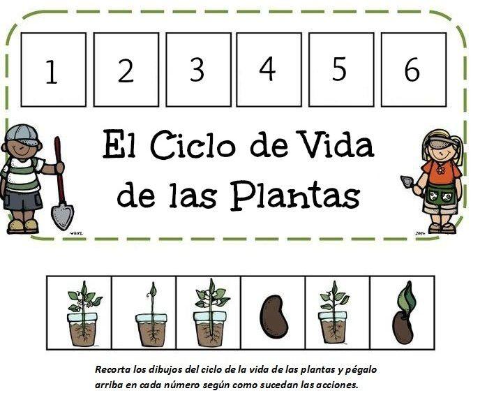 Les 25 meilleures id es de la cat gorie nombre de las - Vitaminas para plantas de interior ...