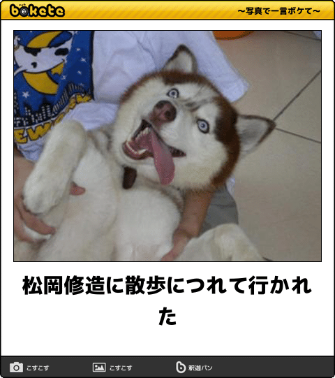 吹いたら負け 年末へ笑ってスパートをかけられる犬のボケて15選 面白い漫画 面白い画像 面白いミーム