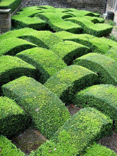 UK - Old Washington - Decorative Box Hedge in Garden | Boxwood hedge