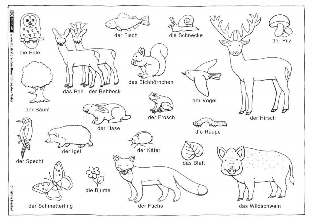 Natur Wald Tiere Pflanzen Henkel Kindergarten Illustration
