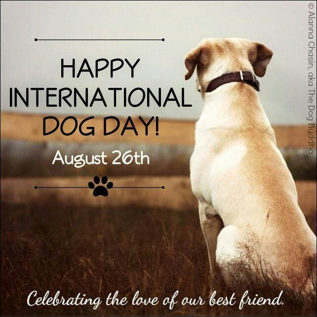 Image result for Happy international dog day