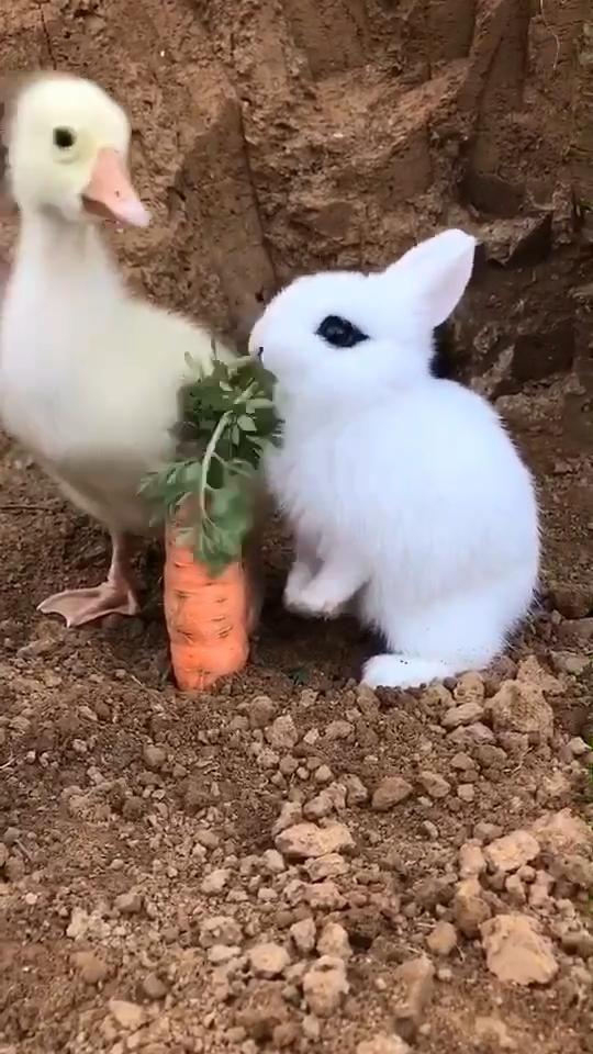 #buuny #bunnyrabbit #babybunny #bunnylover #rabbits #rabbitlover #cutebunny