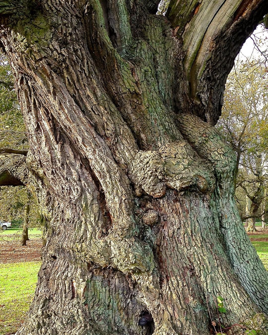 dating old trees