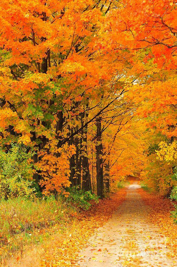 Autumn Marmalade 2 Canvas Print / Canvas Art by Terri Gostola ...