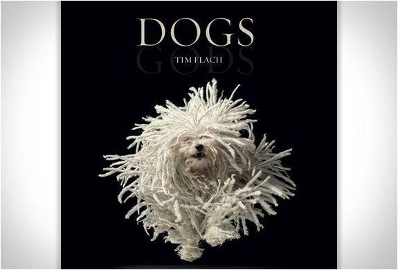 DOGS GODS | BY TIM FLACH