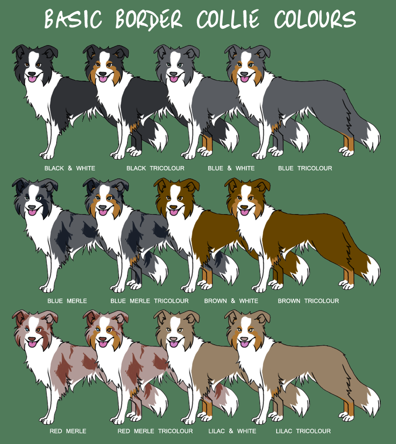 Puppy Color Charts The Dolfie Littles Blog Border Collie Colors Collie Dog Collie
