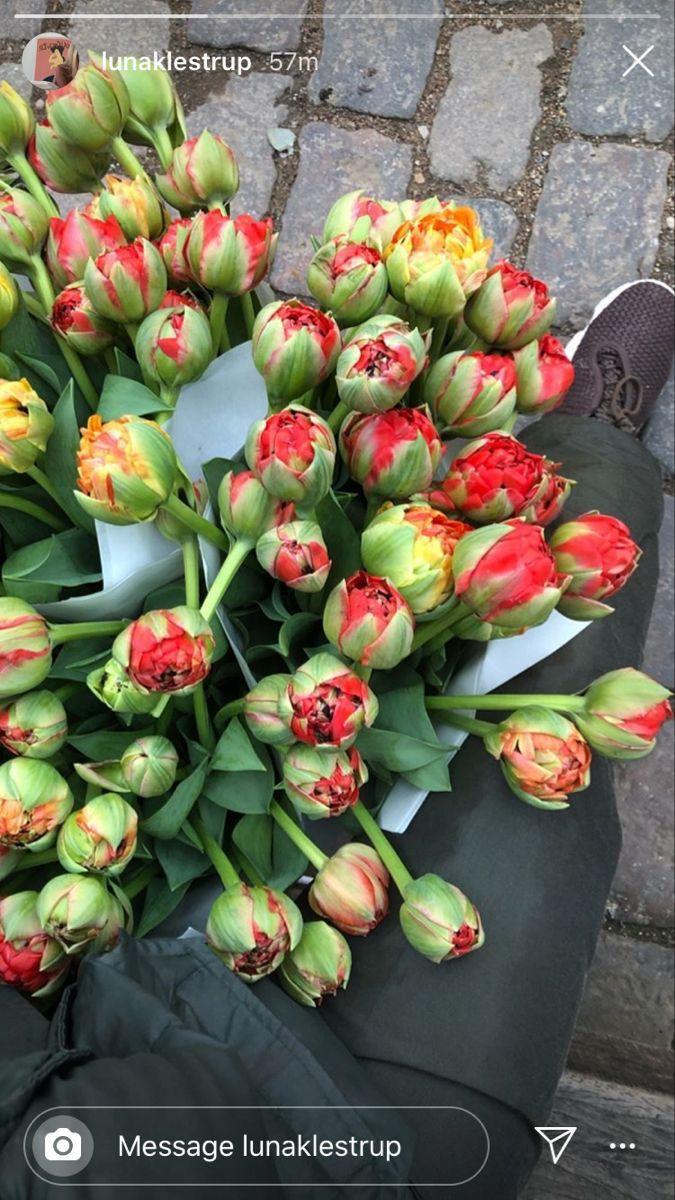 Instagram Lunaklestrup In 2021 Creative Instagram Stories Flora Flowers