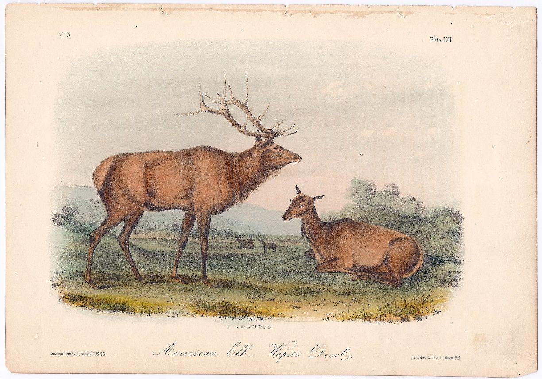 American Elk. Wapiti Deer., American. John James Audubon Wm. E ...