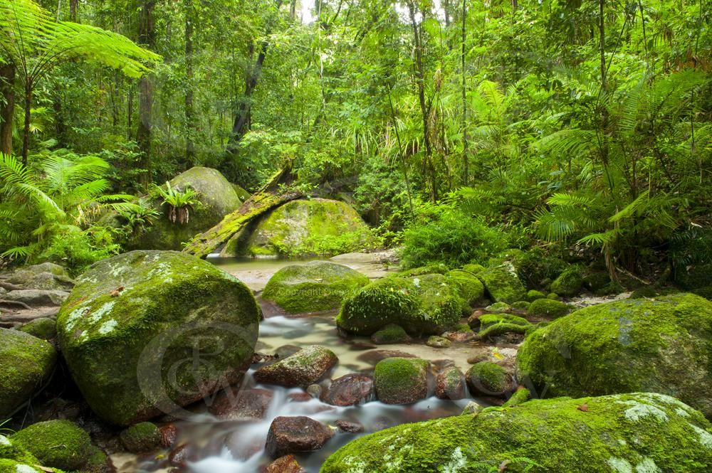 Camping this Australia Day long weekend will be in the Daintree Rainforest....the most beautiful natural place on earth.