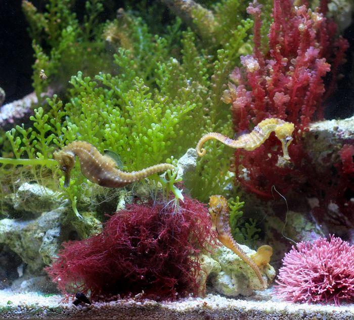 how to create more algae in aquarium