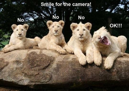 Lion Cubs - Smile for the Camera