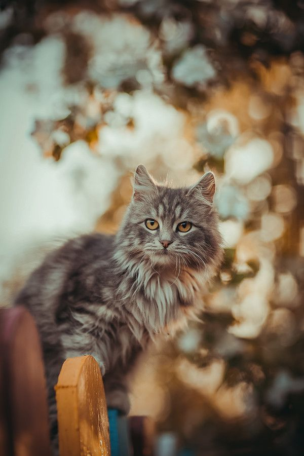 Wow This Place Is So Beautiful Maybe I Can Get Inside To See What S Really Going On With Samissomar S Pinterests Http Cats Crazy Cats Beautiful Cats