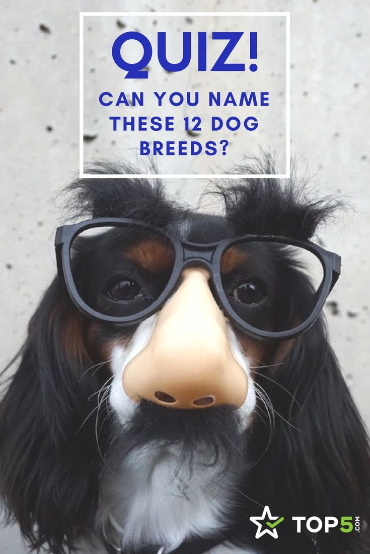 Quiz Can You Name These 32 Dog Breeds? Dog breeds, Dog