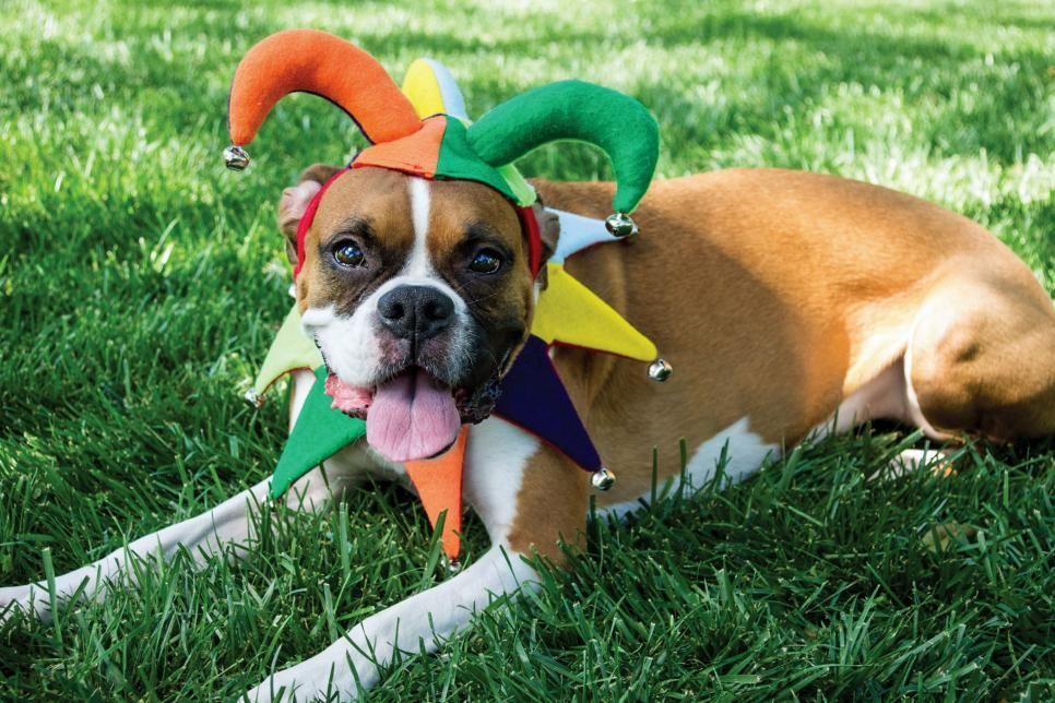 How To Make A Pet Friendly Home Hgtv Diy Pet Costumes Pet