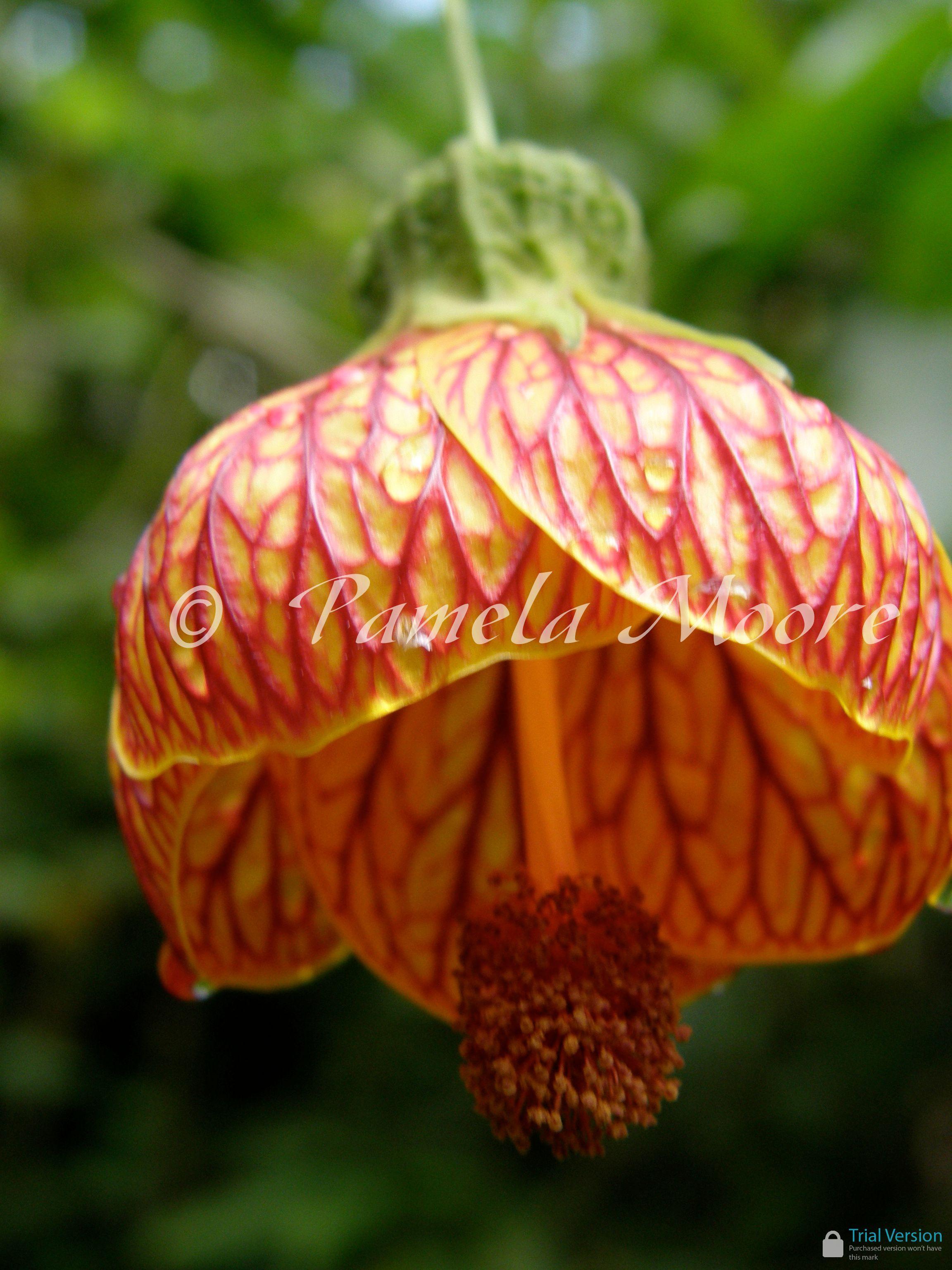 flowers of aguas calientes peru by pamela moore through my own