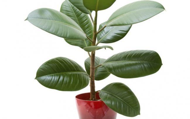 Las mejores plantas para renovar la energ a positiva en el for Plantas para interiores feng shui