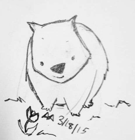 wombat sketch wombatchildrens drawings