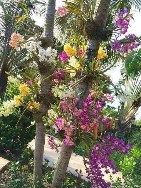 Superbe Dendrobium Orchids, Garden Plants, Orchids Garden, Tree Garden, Indoor  Garden, Garden Design, Tropical Flowers, Tropical Gardens, Beautiful Gardens