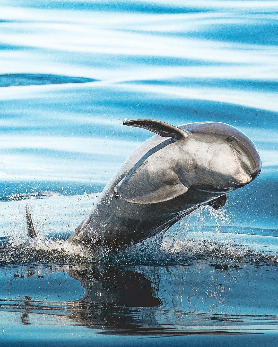 Pin Von Anton Wratschko Auf Wassertiere Wassertiere Tiere