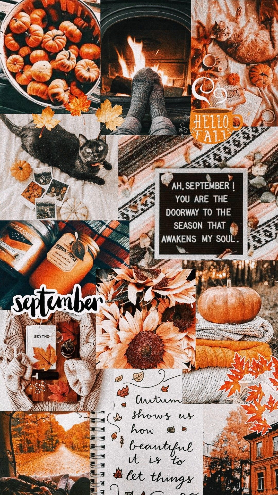 Fall Collage Wallpaper In 2020 Iphone Wallpaper Fall Halloween Wallpaper Iphone Halloween Wallpaper