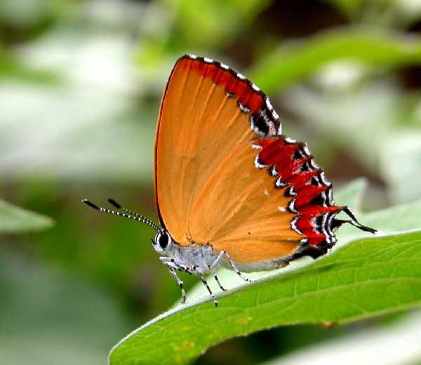 Butterfly Parks of India | Travel India Guide