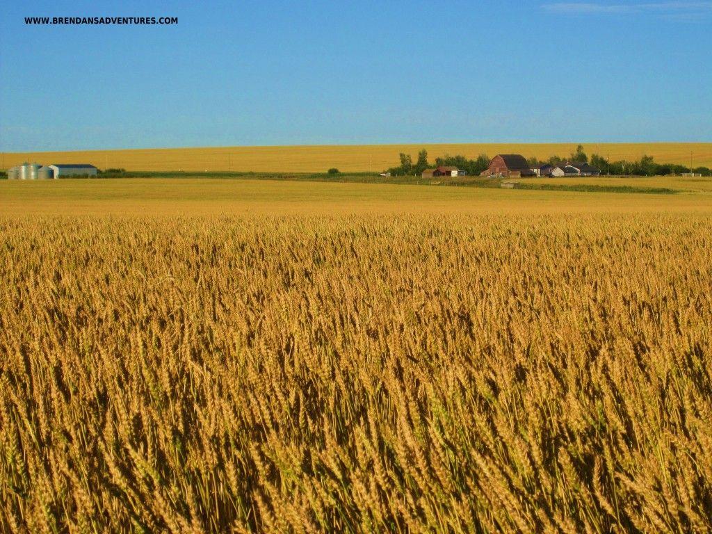 Alberta Prairie, Canada | Alberta Canada | Pinterest ...
