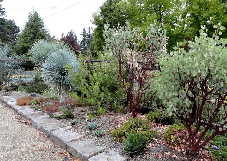 Mediterrane Gartengestaltung agave yucca artigen pflanzen für mediterrane gartengestaltung