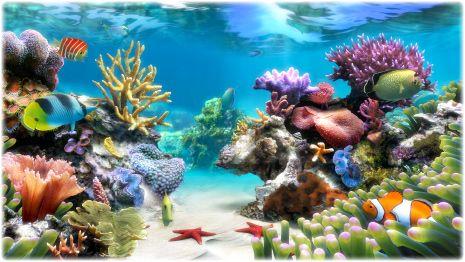 Sim Aquarium Virtual Aquarium Screensaver And Live Wallpaper Lepistes Dokular Akvaryum