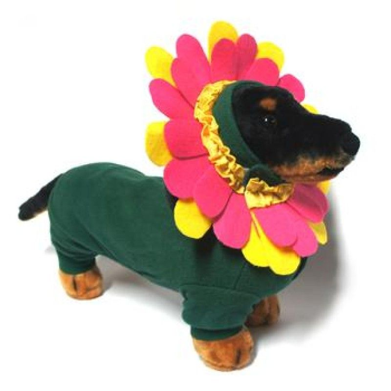 Flower Halloween Dog Costume at BaxterBoo  sc 1 st  Pinterest & Dog Halloween Costume - Pink Garden Flower Colorful Headpiece ...