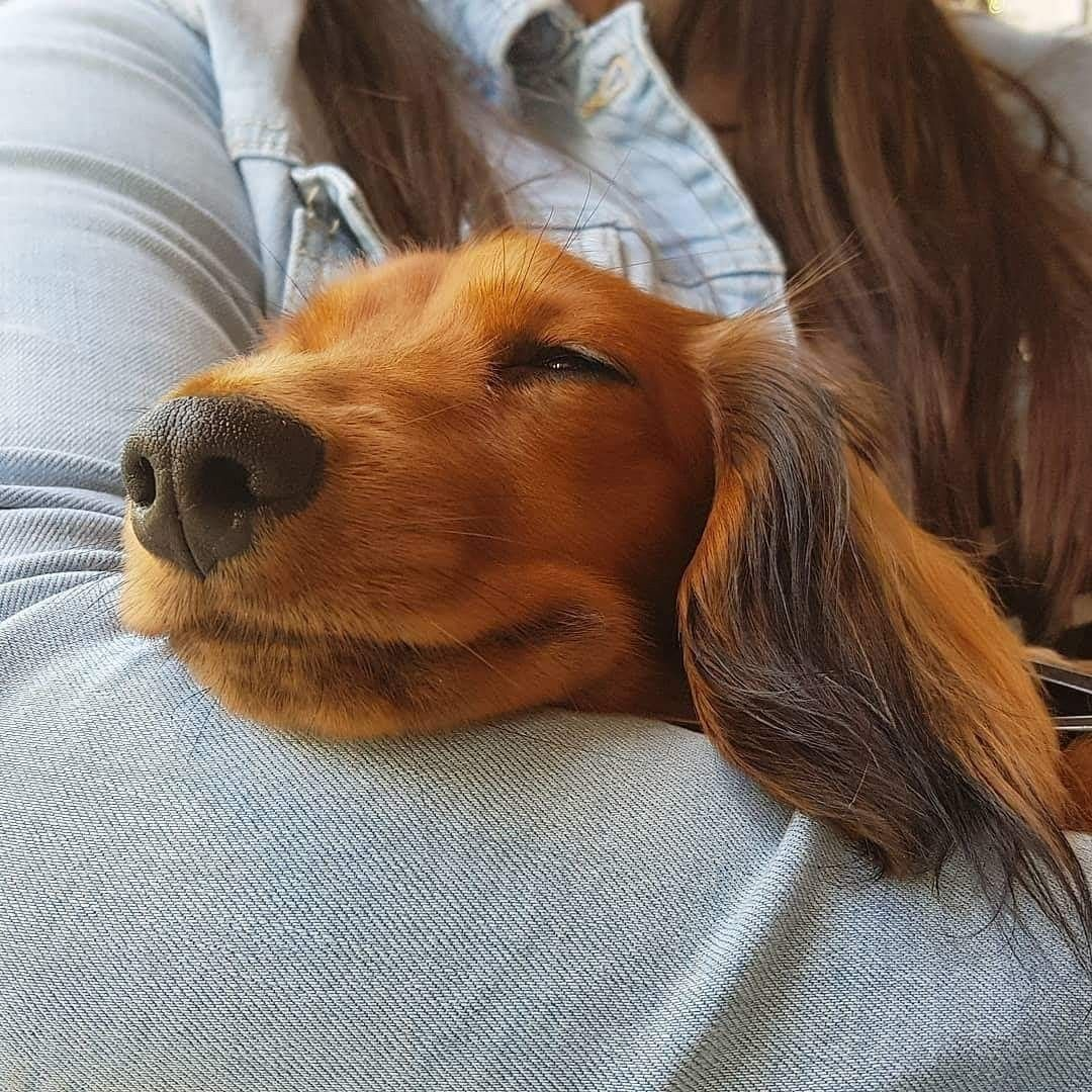 Pin By Danielle Marie On Adorable Doxies 3 With Images